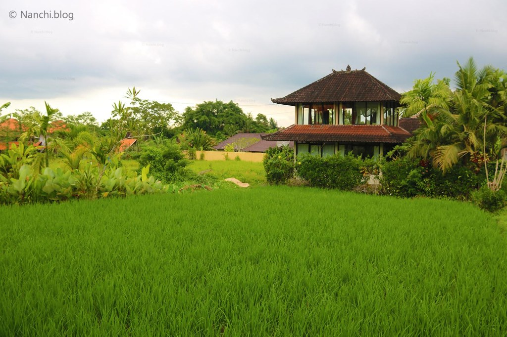 Grass fields, Yellow Flower Cafe, Ubud, Bali