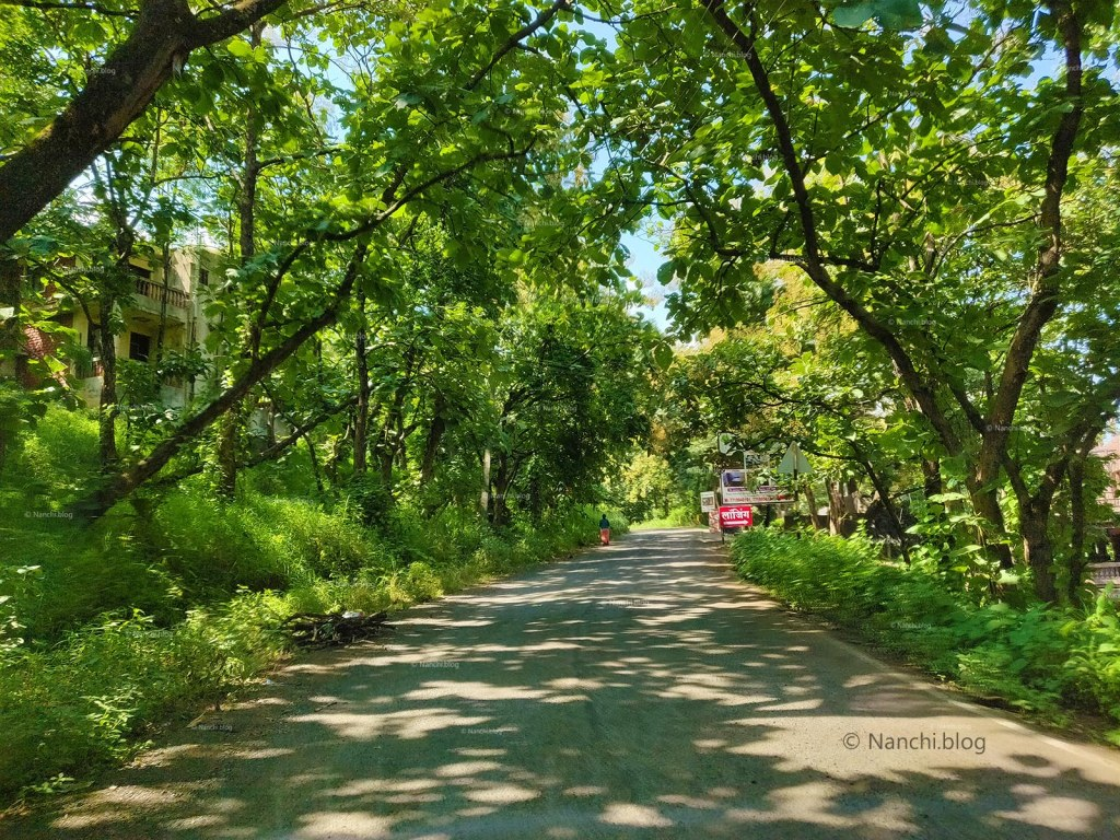 Beautiful shaded road towards Sinhagad Fort, Pune
