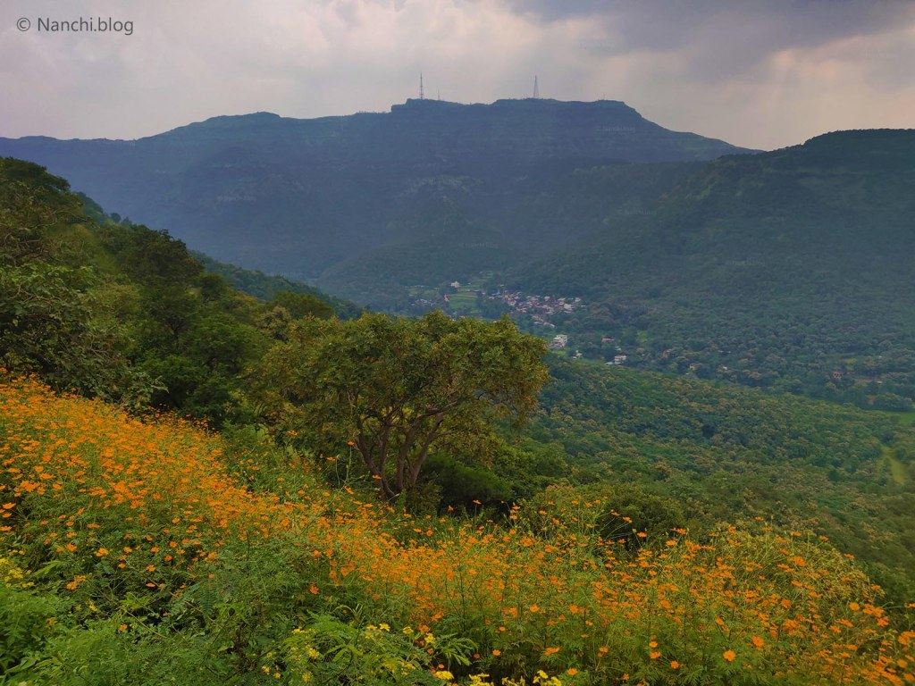 Sinhagad Valley covered with yellow flowers, Sinhagad Fort, Pune