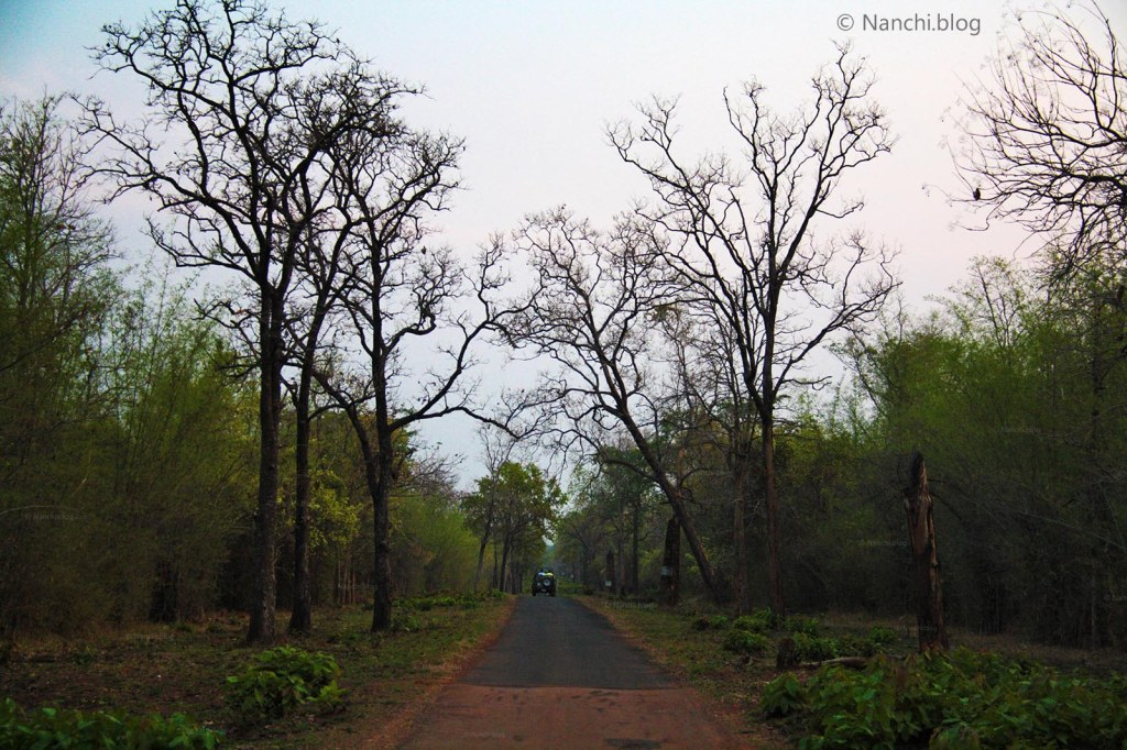 Evening Safari Path, Tadoba Andhari Tiger Reserve, Chandrapur