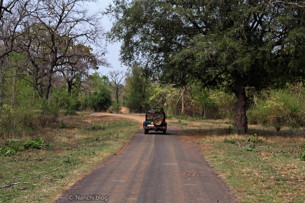 Jeep Safari, Tadoba Andhari Tiger Reserve, Chandrapur