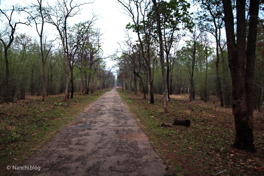 Jungle Path, Tadoba Andhari Tiger Reserve, Chandrapur, Maharashtra
