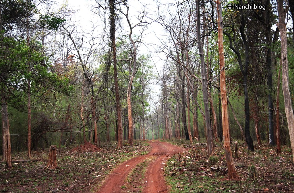 Jungle Safari Path, Tadoba Andhari Tiger Reserve, Chandrapur, Maharashtra