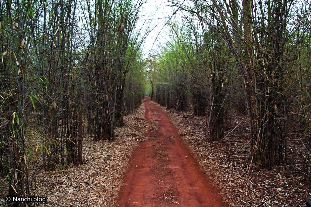 Path, Tadoba Andhari Tiger Reserve, Chandrapur, Maharashtra