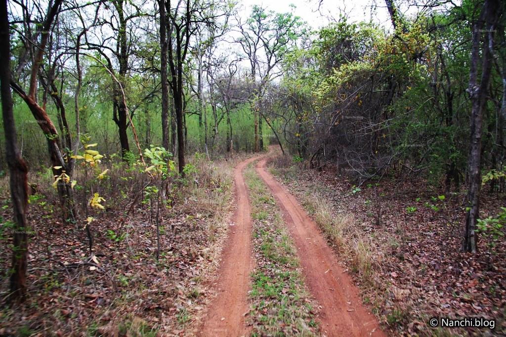 Safari Path, Tadoba Andhari Tiger Reserve, Chandrapur, Maharashtra
