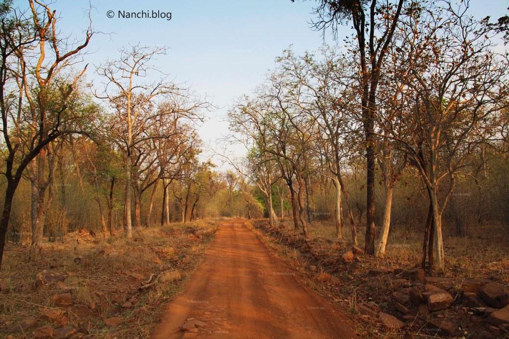 Safari Route, Tadoba Andhari Tiger Reserve, Chandrapur, Maharashtra