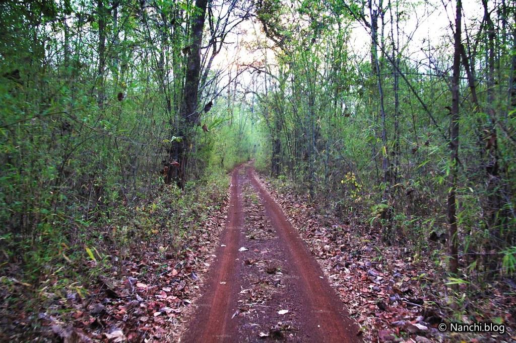 Safari Tracks, Tadoba Andhari Tiger Reserve, Chandrapur, Maharashtra