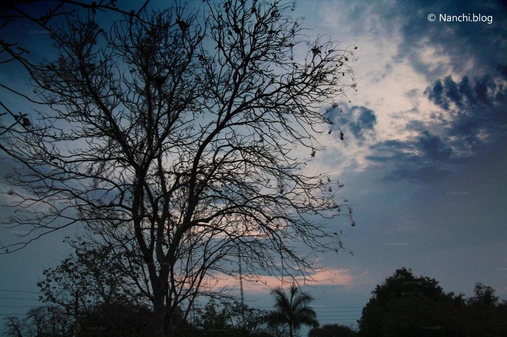Sunrise, Tadoba Andhari Tiger Reserve, Chandrapur, Maharashtra