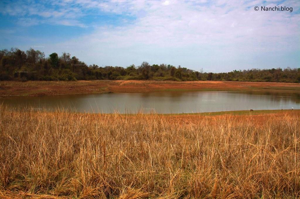 Water Body, Tadoba Andhari Tiger Reserve, Chandrapur, Maharashtra