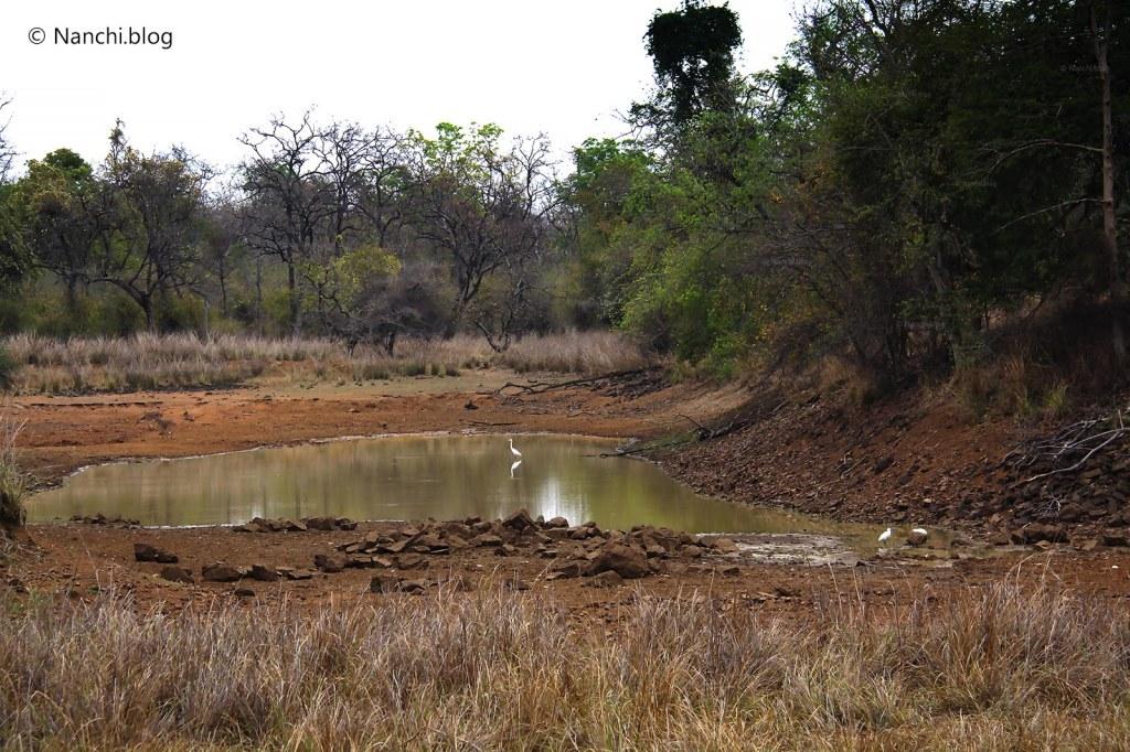 Water Pond, Tadoba Andhari Tiger Reserve, Chandrapur, Maharashtra