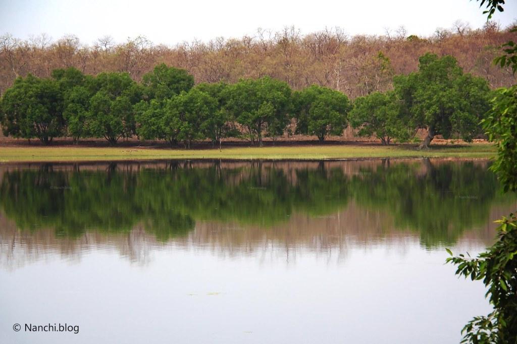 Water Source, Tadoba Andhari Tiger Reserve, Chandrapur, Maharashtra