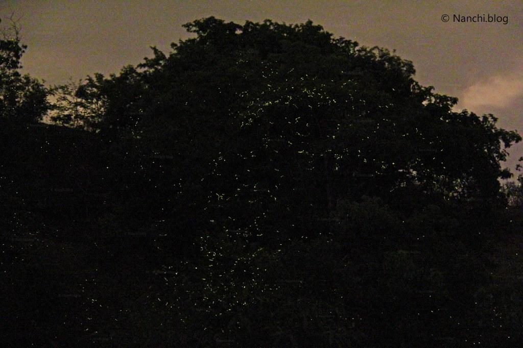 Fireflies in Bhorgiri, Bhorgiri, Pune, Maharashtra