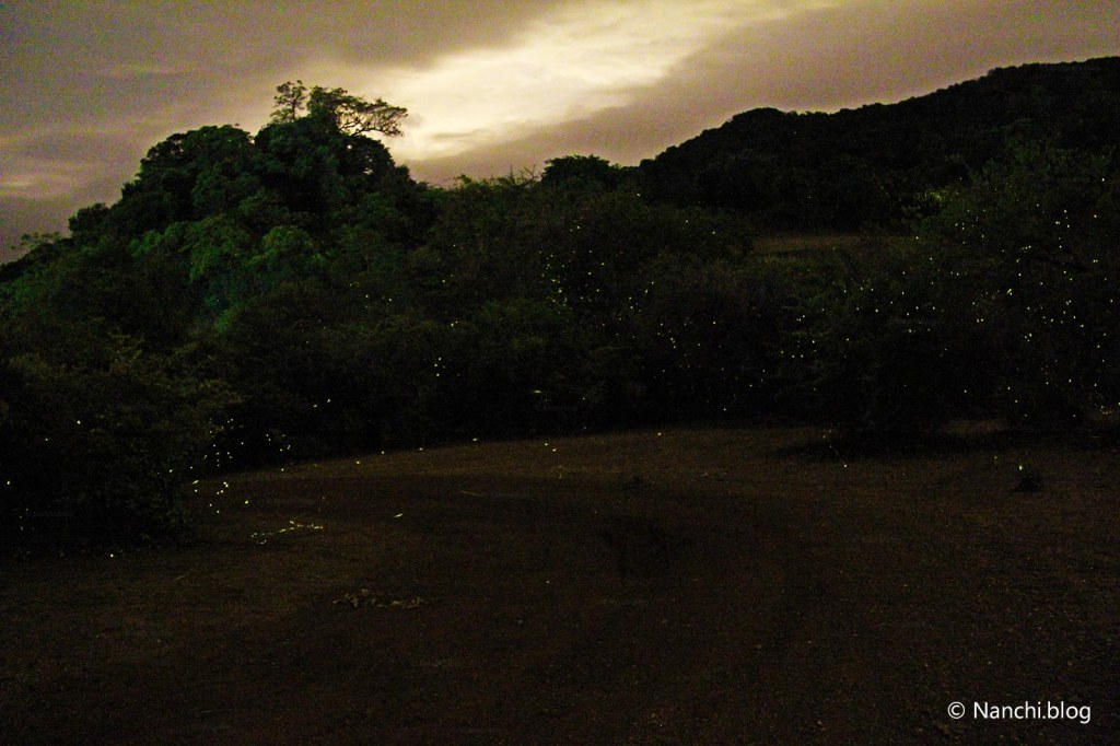 Jungle Path, Bhorgiri Fireflies, Bhorgiri, Pune, Maharashtra