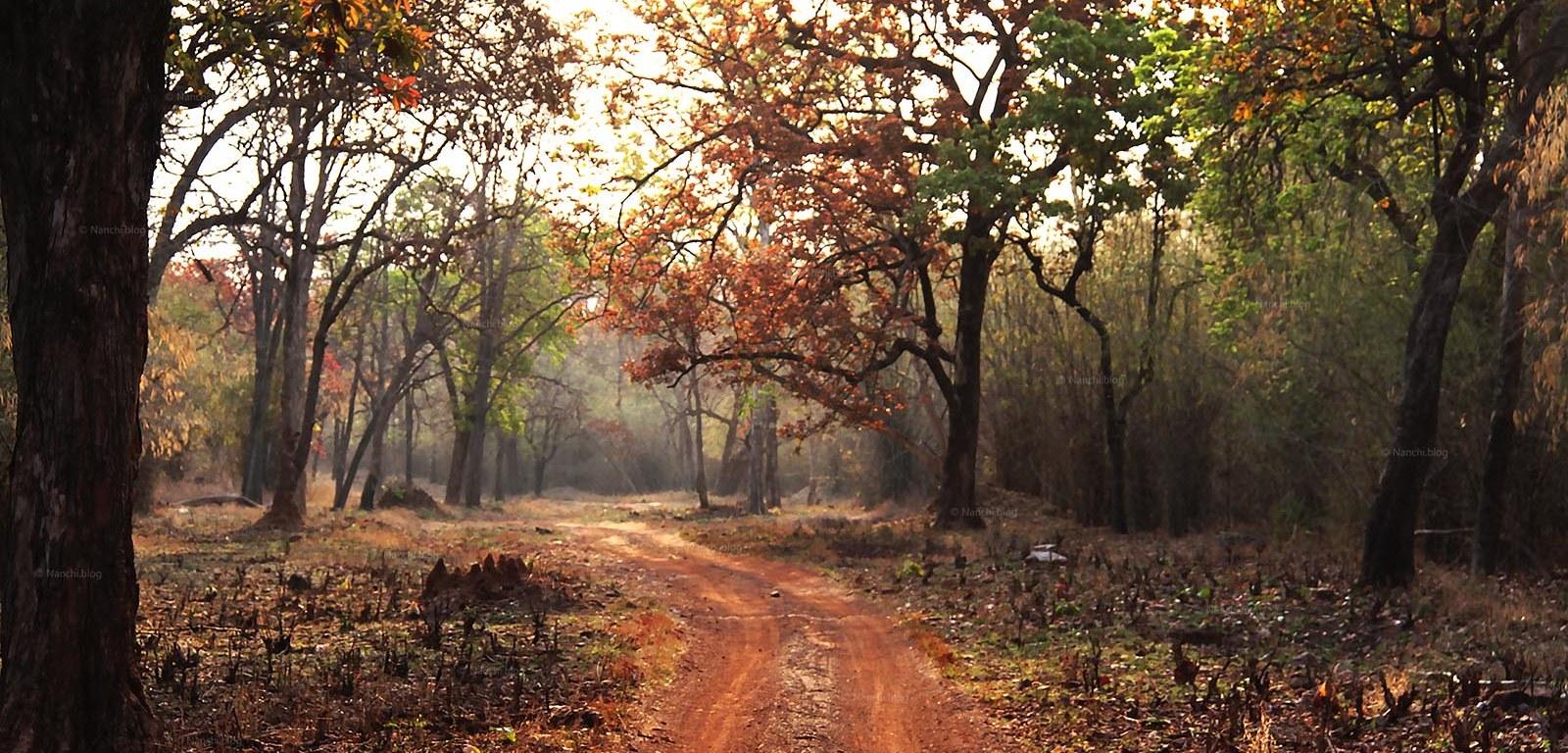 Jungle Path, Tadoba Andhari Tiger Reserve, Chandrapur, Maharashtra