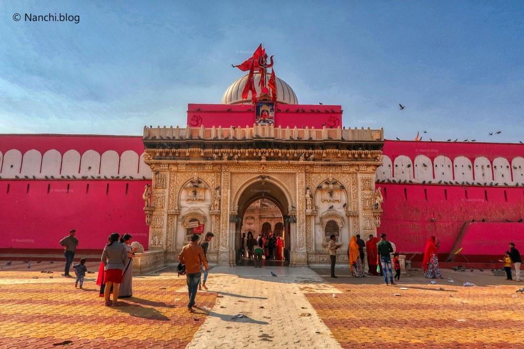 Karni Mata Temple, Bikaner • Nanchi's Fun Facts Friday!