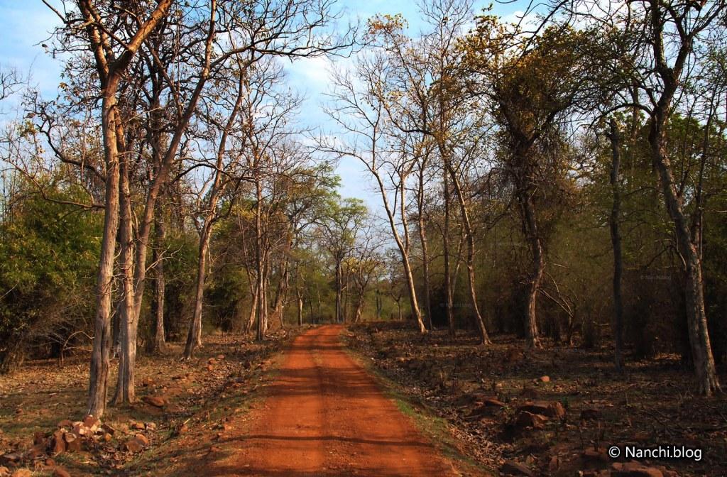 Safari Track, Tadoba Andhari Tiger Reserve, Chandrapur, Maharashtra