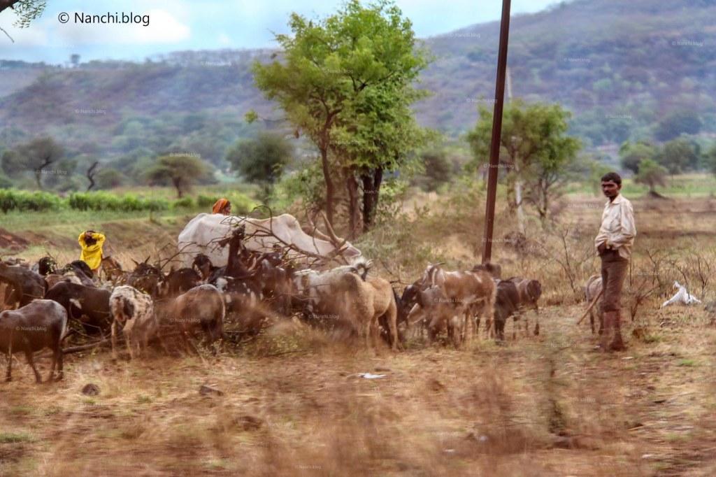 Shepherd, Bhorgiri, Pune, Maharashtra