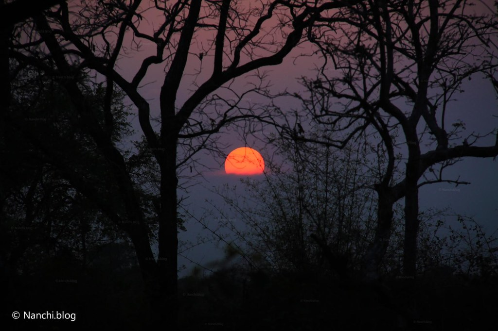 Sunset in Jungle, Tadoba Andhari Tiger Reserve, Chandrapur, Maharashtra