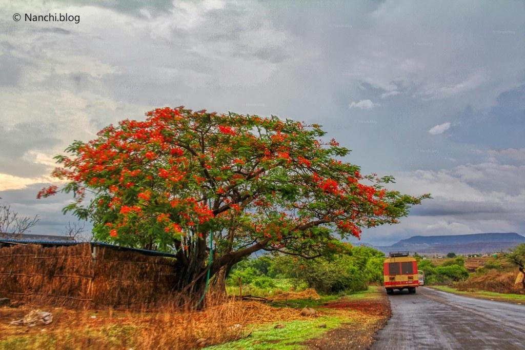 Tree, Bhorgiri, Pune, Maharashtra