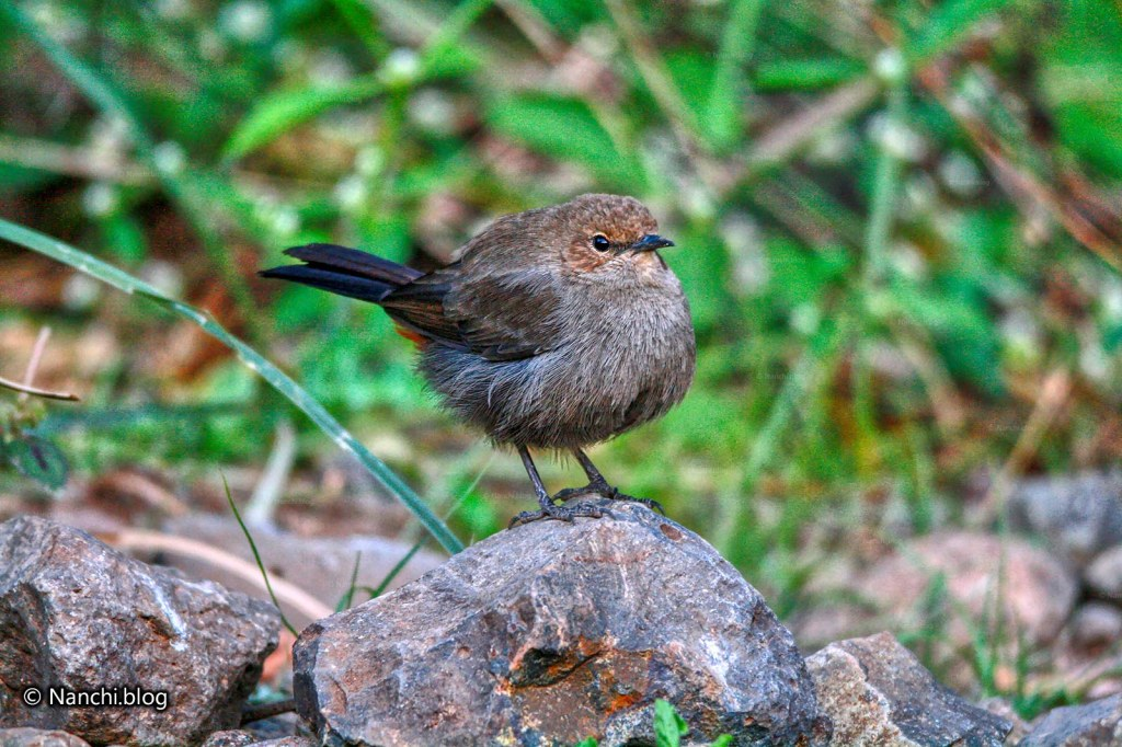 Brown Rock chat, Sinhagad Valley, Pune