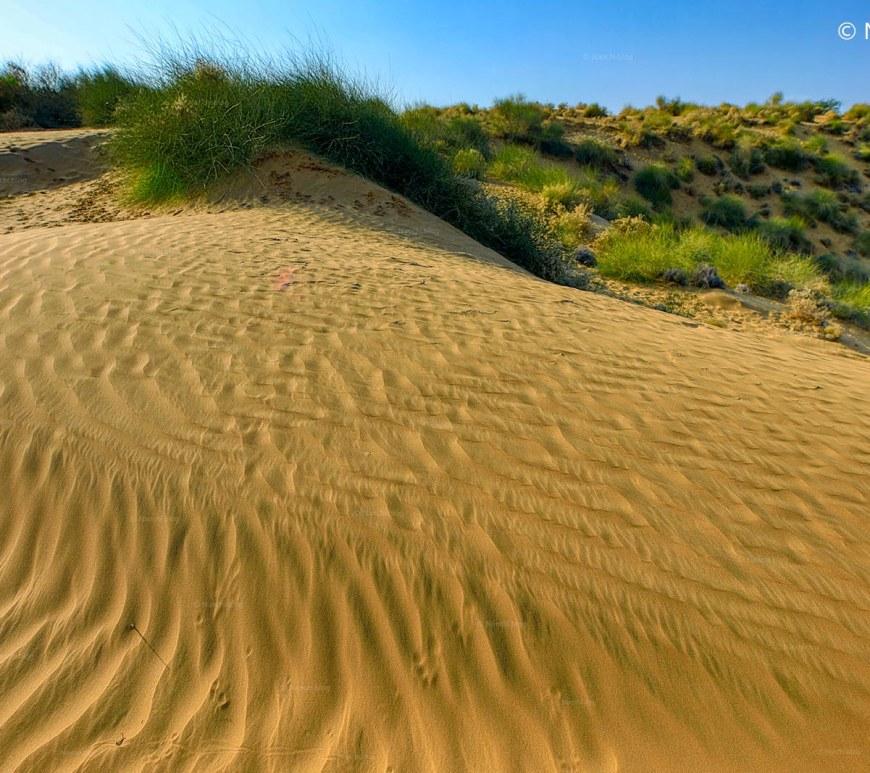 Desert of Bikaner