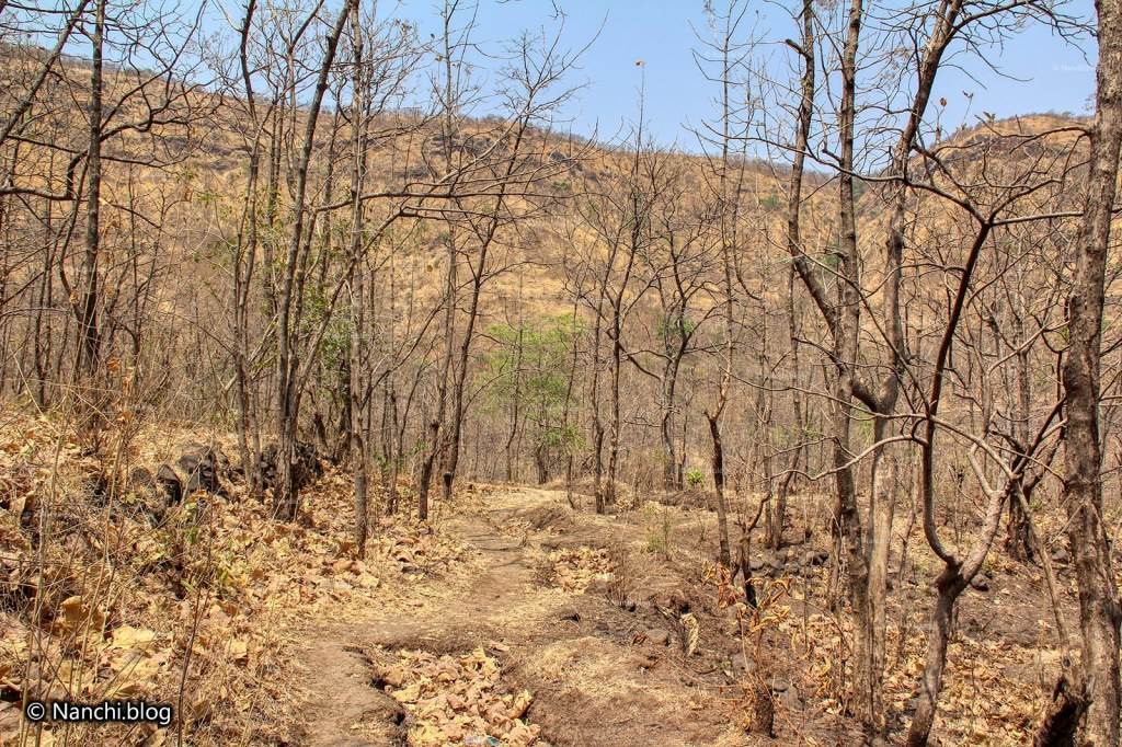 Paths, Sinhagad Valley, Pune