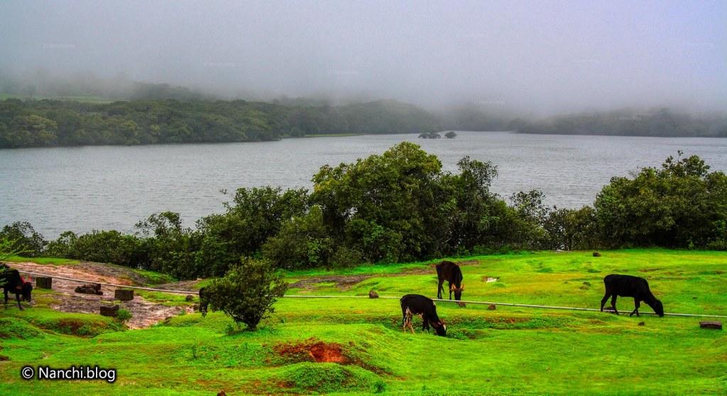 Kaas Lake, Satara, Maharashtra